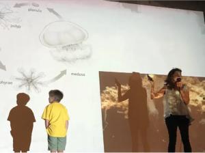 Juli talking jellyfish life cycle.