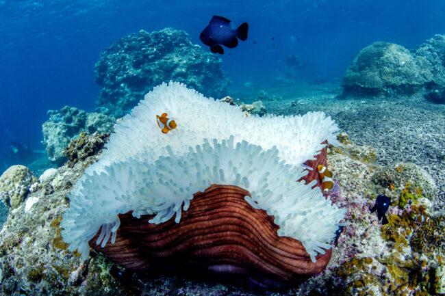 IYOR The Ocean Agency Coral Bleaching